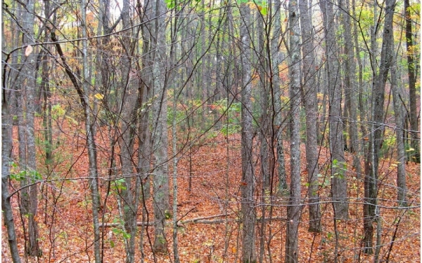 Listing Image #2 - Land for sale at 5.95A Alp Ln, Blue Ridge GA 30513