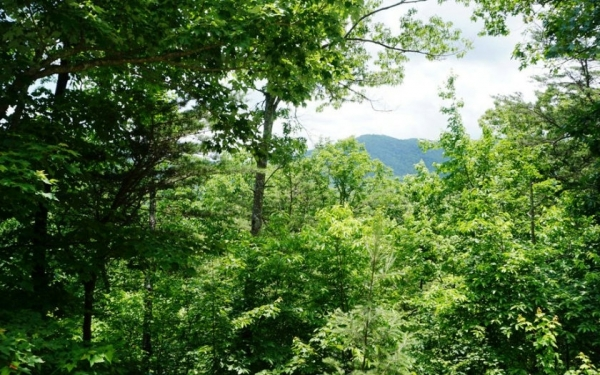 Listing Image #3 - Land for sale at L 13 Overlook Way, Blue Ridge GA 30513