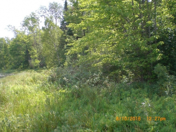 Listing Image #3 - Land for sale at Chippewa Trail Lot 65, Johannesburg MI 49751