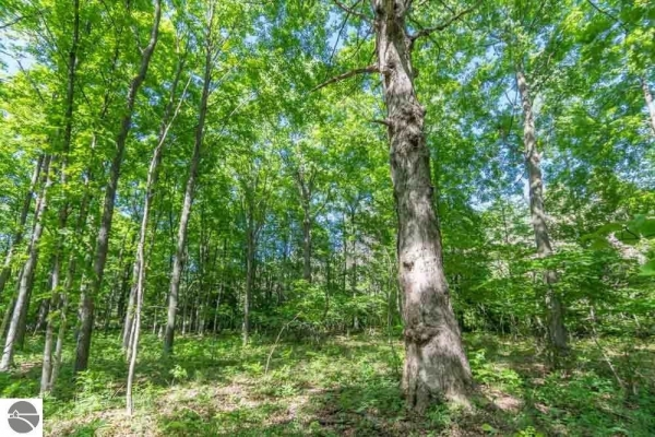 Listing Image #3 - Land for sale at S Kitlinger Road, Empire MI 49630