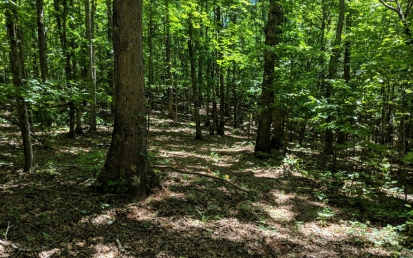 Listing Image #1 - Land for sale at LT 15 Sunrise Rd, Hiawassee GA 30546