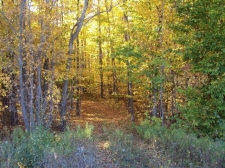Land for sale in Afton, MI