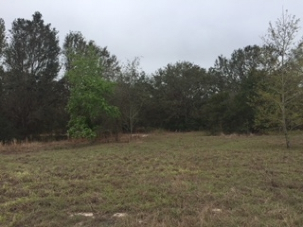 Listing Image 1 Land For Sale At 7803 Lewis Grove Rd Groveland Fl