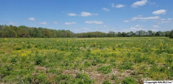Listing Image #1 - Land for sale at 0 A & B THOMPSON LANE, Hazel Green AL 35750