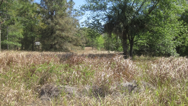 Listing Image #1 - Land for sale at 917 N Lecanto Hwy, Lecanto FL 34461