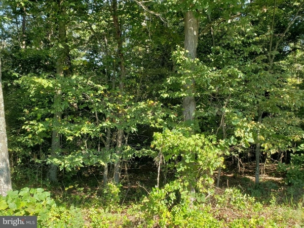 Listing Image #2 - Land for sale at 480 Parishville Road, Gore VA 22637