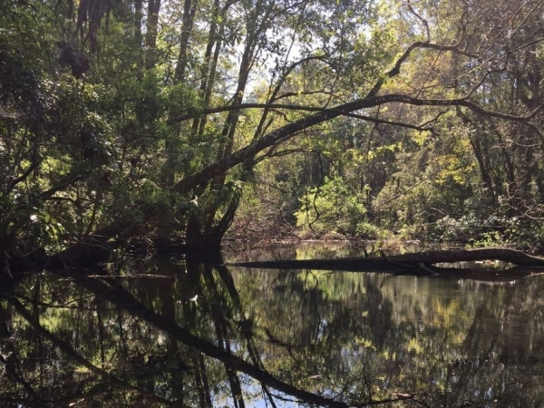 Listing Image #1 - Land for sale at 9050 W Spring Cove Rd, Homosassa Springs FL 34446