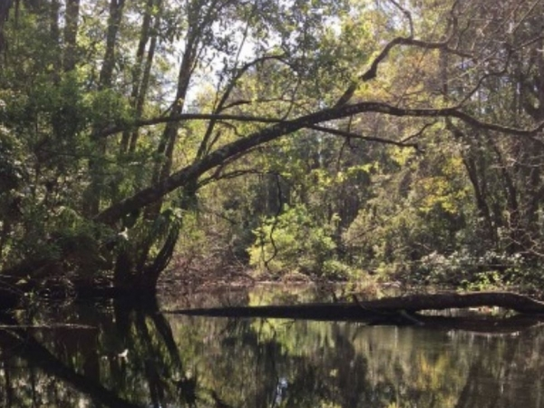 Listing Image #3 - Land for sale at 9050 W Spring Cove Rd, Homosassa Springs FL 34446