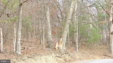 Listing Image #3 - Land for sale at MEYERS Meyers Street, Berkeley Springs WV 25411