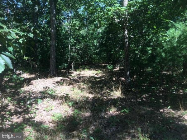 Listing Image #3 - Land for sale at FOUR Four Wheel Drive, Star Tannery VA 22654