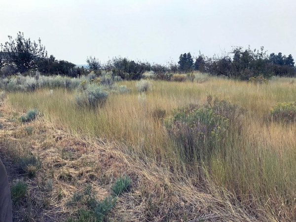 Listing Image #2 - Land for sale at Pleasant View Lot 34, CHILOQUIN OR 97624