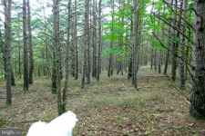 Listing Image #2 - Land for sale at 115 TROUGH VIEW Rd, MOOREFIELD WV 26836