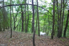 Listing Image #3 - Land for sale at 115 TROUGH VIEW Rd, MOOREFIELD WV 26836