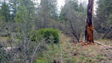 Land for sale in BONANZA, OR