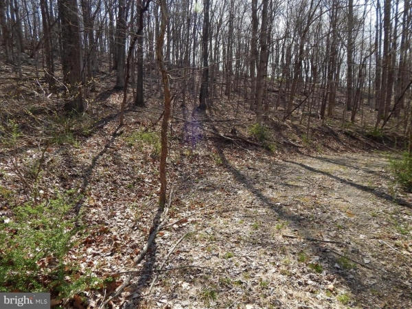 Listing Image #1 - Land for sale at Lot 4 Off Spicy Cedar Lane, Berkeley Springs WV 25411