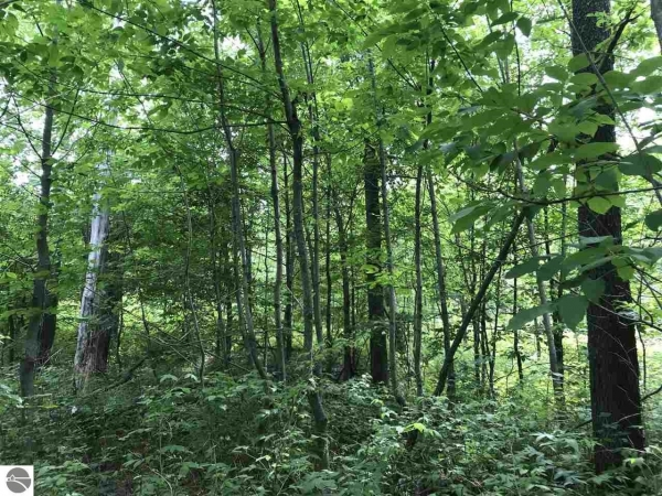 Listing Image #2 - Land for sale at 0 W 26 Road , 0 Rickadee Ln, Mesick MI 49601-0000