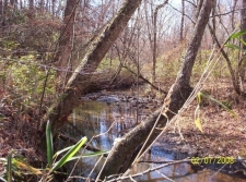 Listing Image #1 - Land for sale at County Rd 56, Woodland AL 36280