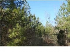 Listing Image #1 - Land for sale at 1 HWY 67, #100, Calera AL 35040