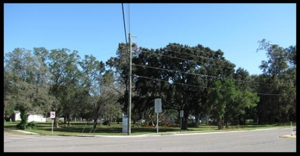 Listing Image #5 - Land for sale at 7411 Ehrlich Rd, Tampa FL 33625