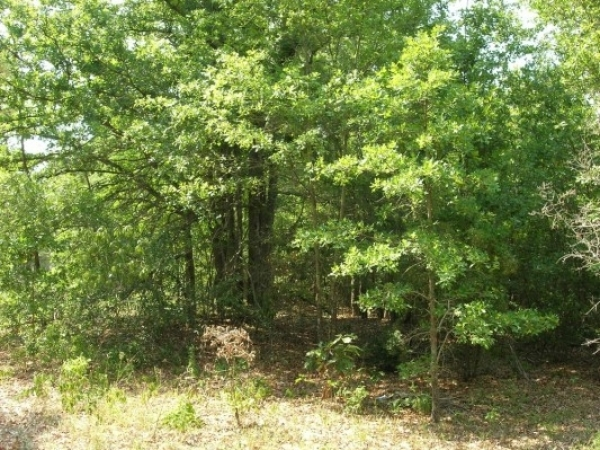 Listing Image #1 - Land for sale at 0 William Few Pky, Grovetown GA 30813