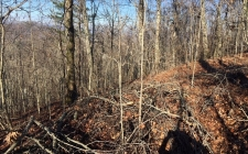 Listing Image #2 - Land for sale at LT 74 Mountain Top Rd, Blairsville GA 30512