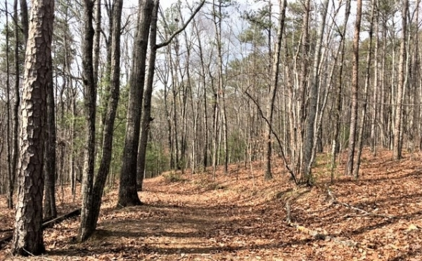 Listing Image #1 - Land for sale at LT 15 Pension Rd, Ellijay GA 30540