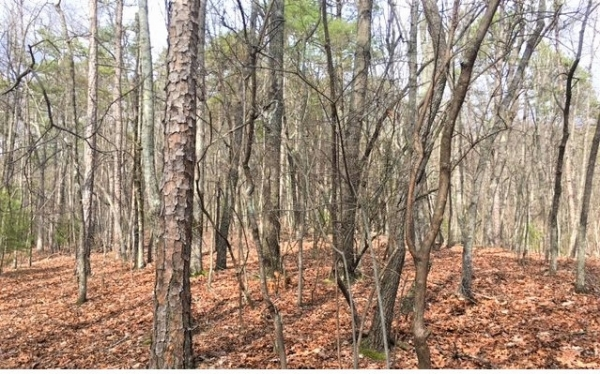 Listing Image #2 - Land for sale at LT 15 Pension Rd, Ellijay GA 30540