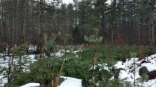 Land for sale in Pelham, NH