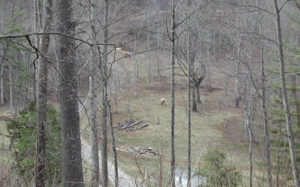 Listing Image #3 - Land for sale at Cold Branch, Hayesville NC 28904