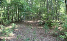 Listing Image #2 - Land for sale at LT 24 Pickett Mill, Ellijay GA 30540